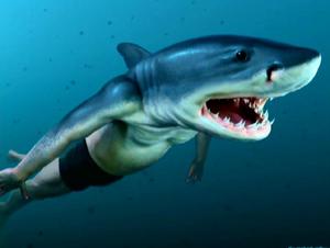 Viktor Krum tiburon.PNG