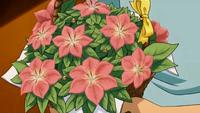 P11 Ramo de flores Gracídea