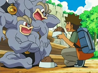 Archivo:EP526 Brock dando de comer a los Machamp.png
