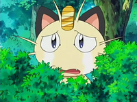 Archivo:EP522 Meowth conmovido.png