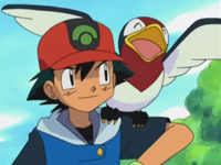Archivo:EP280 Taillow y Ash.png