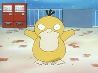 Archivo:EP036 Psyduck.png