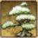 Tree 3 PK.png