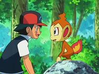 Archivo:EP550 Ash con Chimchar.png