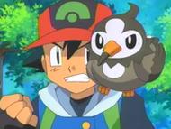 EP472 Starly en el hombro de Ash