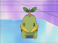 EP470 Turtwig en el laboratorio