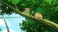 EP844 Caterpie y Weedle.png