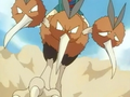 EP033 Dodrio (3).png