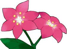 Archivo:Ilustración de una flor gracídea.jpg
