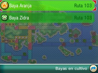 Detalle de bayas plantadas ROZA