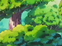 EP145 Árbol de bonguri verde