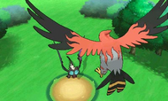 Talonflame preparándose para usar Pájaro osado XY