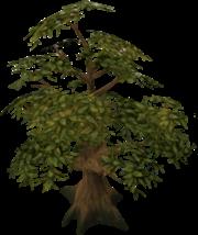 180px-Oak tree detail