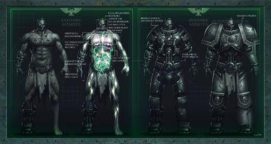 Anatomía Astartes servoarmadura.jpg