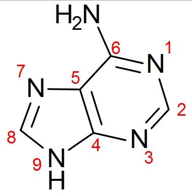 File:Adenosine.jpg