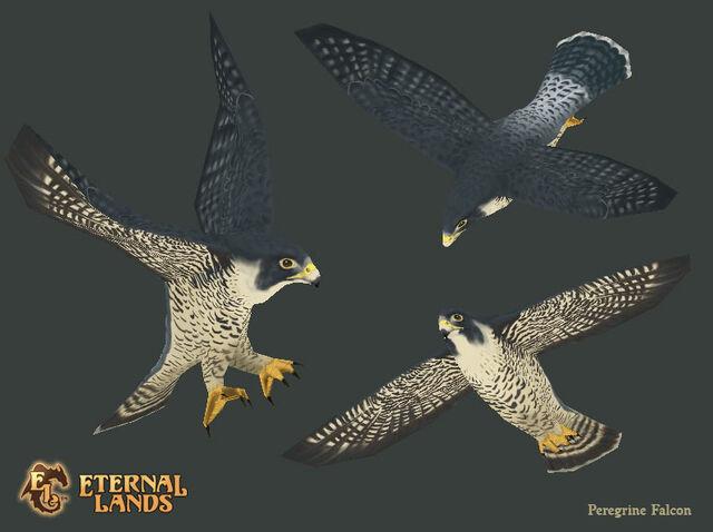 File:Creature Falcon.jpg