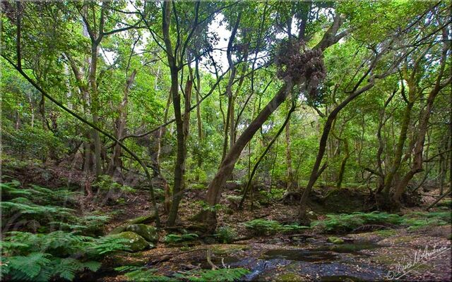 File:Subtropical forest.jpg