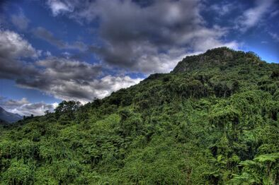 Rainforest-mountain-eecue 27054 iu05 l