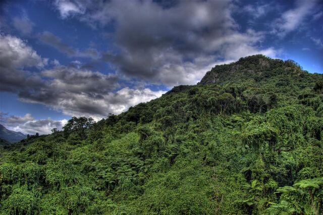 File:Rainforest-mountain-eecue 27054 iu05 l.jpg