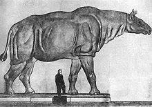 220px-Paraceratherium size