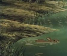 Hazel swimming