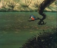 Watership Down kingfisher