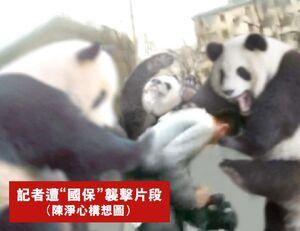 Reporter assault panda