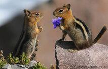 Funny Animal Love 6