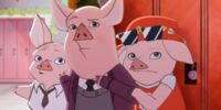 Trzy małe świnki