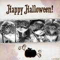 Facebook - happy Halloween.png