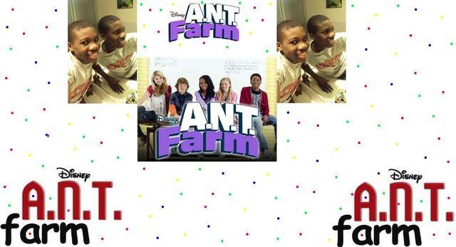 File:Ant farm.JPG