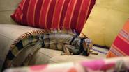 12-czarownica-iguana-s01e12-pldub-web-dl-xvid