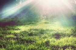 The Fairy Grass