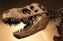 File:T-rex head.jpg