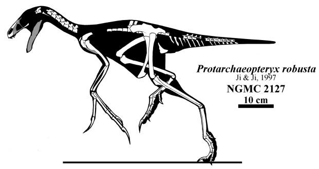 File:Protarchaeopteryx - 1(Skeletal).jpg
