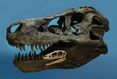 File:Comparison T-rexRaptorex skulls.jpg