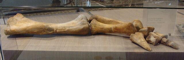 File:Lurdusaurus - 2(Forelimb).jpg