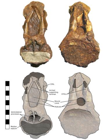 File:Xenoposeidon - 3(Holotype).png