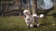 F3 DLC Poodle