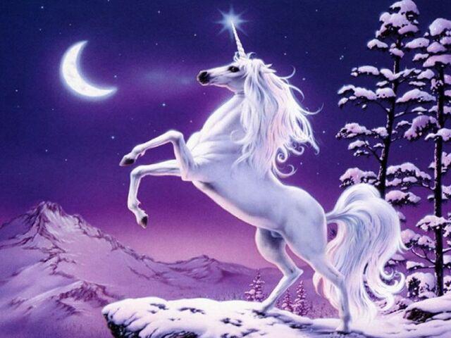File:Unicorn-image-1-.jpg