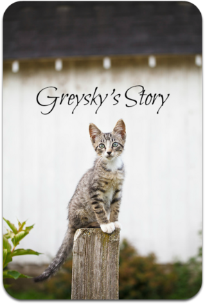 Gray-tabby-kitten-seated-on-fencepost-looking-at-camera-MG-7506