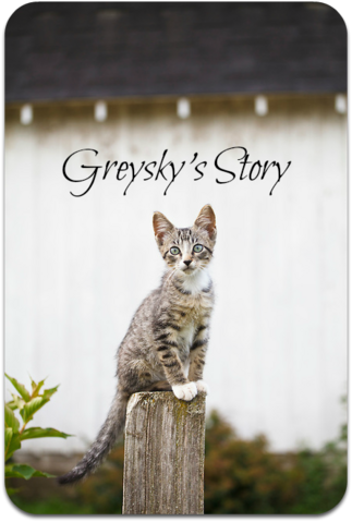 File:Gray-tabby-kitten-seated-on-fencepost-looking-at-camera-MG-7506.png