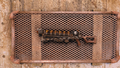 FO4 Gauss rifle full capacitors.png
