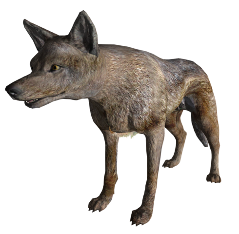 File:CoyoteFNV.png