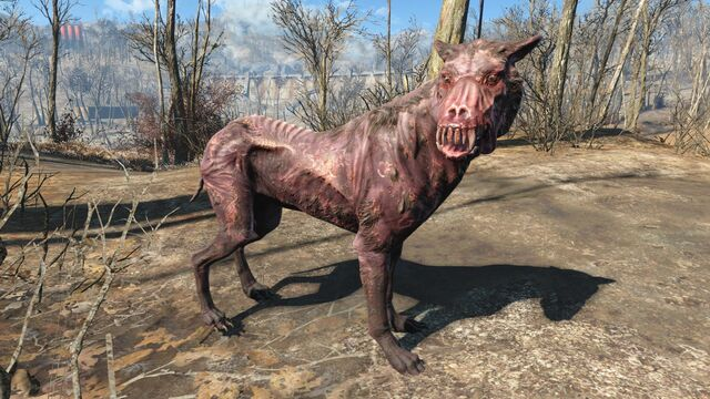 File:FO4 Alpha wild mongrel.jpg