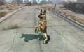 Fo4 Dogmeat's trick.png