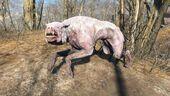 FO4 Albino mongrel