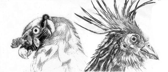 File:VulturPapa-Hoatzin.png
