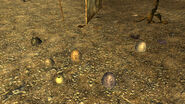 FNV TestMap01 eggs