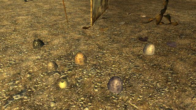 File:FNV TestMap01 eggs.jpg